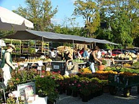 Northville Farmer's Market